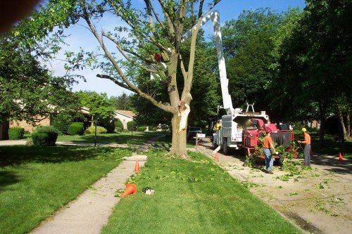 Tree Service Professionals Call Sharp Tree Service