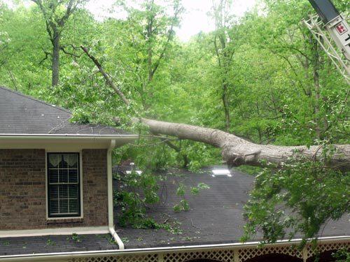 Emergency Tree Removal of Fallen Tree