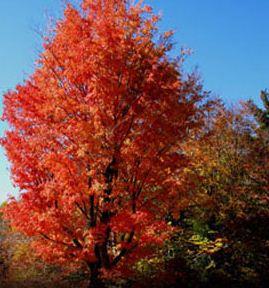 trees of Woodstock
