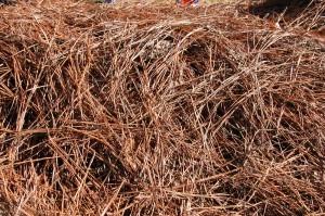 pine straw (2)
