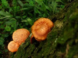 Tree Hazards: Mushrooms