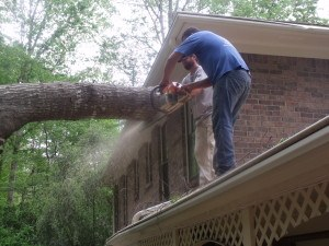 tree removal near your home