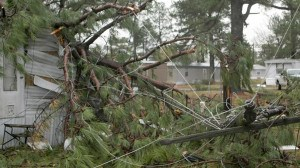 A tree limb is tangled in a power line