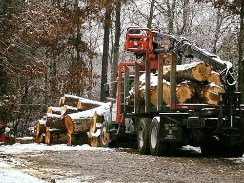 Sharp Tree Service - Working in the Snow