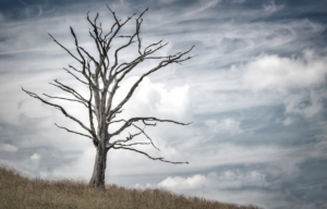 Sharp Tree Service - Dying Tree