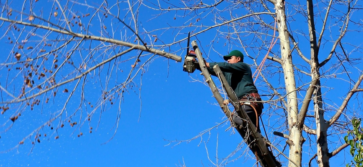 Sharp Tree Service - Arborist Trimming Branch