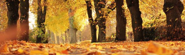 Fall Season Tree Maintenance