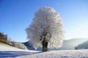alpharetta tree service frozen winter tree