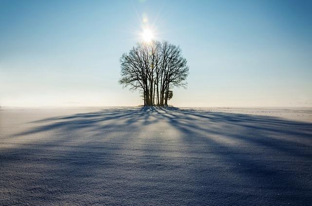 alpharetta tree service winter tree pic