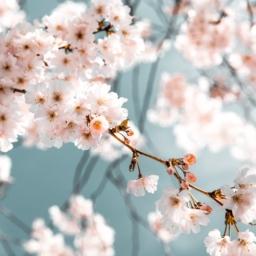 flowers in bloom after tree pruning