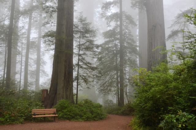 cumming tree service nature hike trail